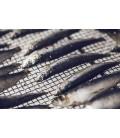 Sardinka - sušený stejk